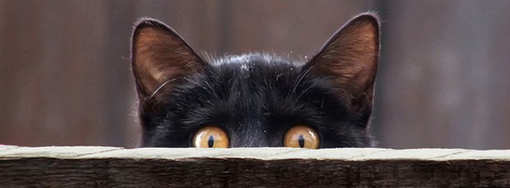 100 Cute Cat & Kitten Cover Photo for Facebook Timeline