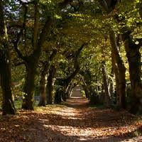 Kasteel Amerongen - Google zoeken - Beech  coverd walk