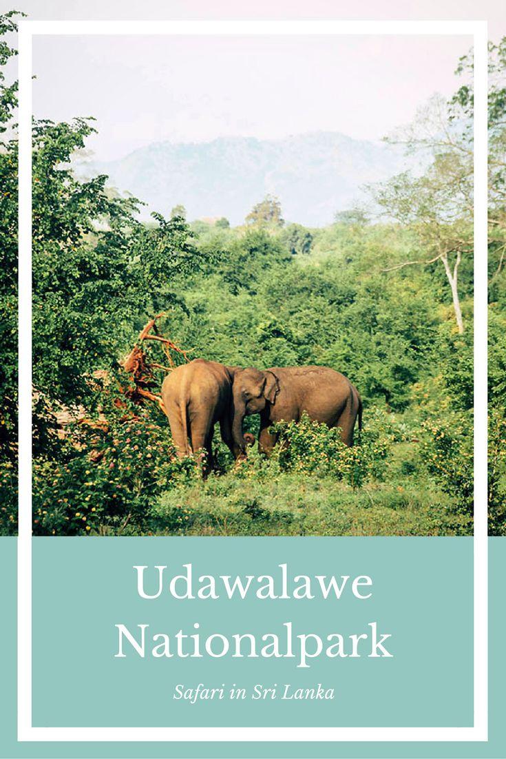 Der Udawalawe Nationalpark in Sri Lanka. Eine Safari mit Aussicht. #SriLanka #UdawalaweNationalpark