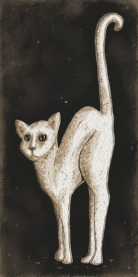 De Witte Kat van Nathalie Antalvari
