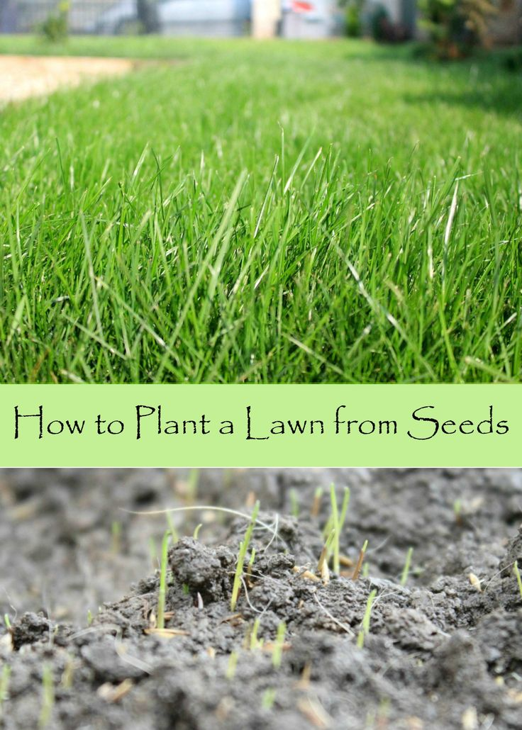 25 Best Ideas About Lawn Seed On Pinterest Growing Grass From Seed Fall Lawn Care And Yard