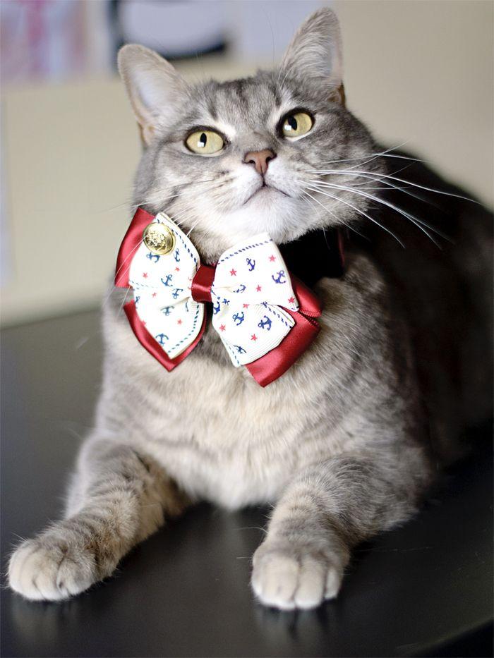 Kiki and her new red and white papillon! #paccony #kikithesweetycat #cat #kiki #cute #nice #animals #papillon #bowtie #eyes #gatto #gatta #pursesandi www.pursesandi.net