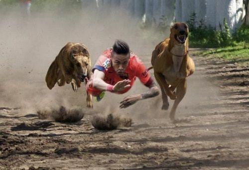 Piłkarz Barcelony stara się wyprzedzić dwa psy • Neymar ściga się na piasku z dużymi psami • Zobacz mem piłkarski na FunFootball >> #neymar #memes #football #soccer #sports #pilkanozna #funny