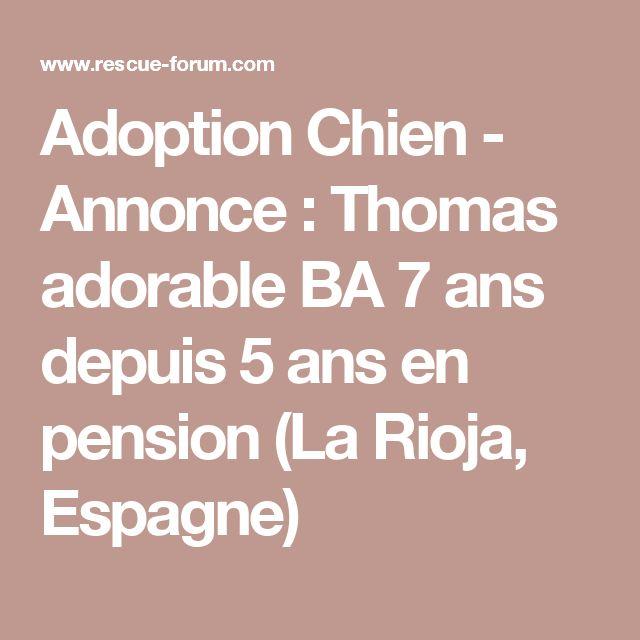 Adoption Chien - Annonce : Thomas adorable BA 7 ans depuis 5 ans en pension (La Rioja, Espagne)