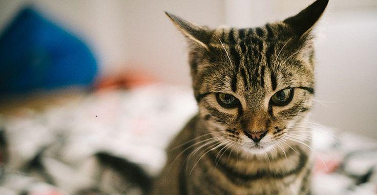 Comment nous stressons nos chats en les prenant pour des chiens