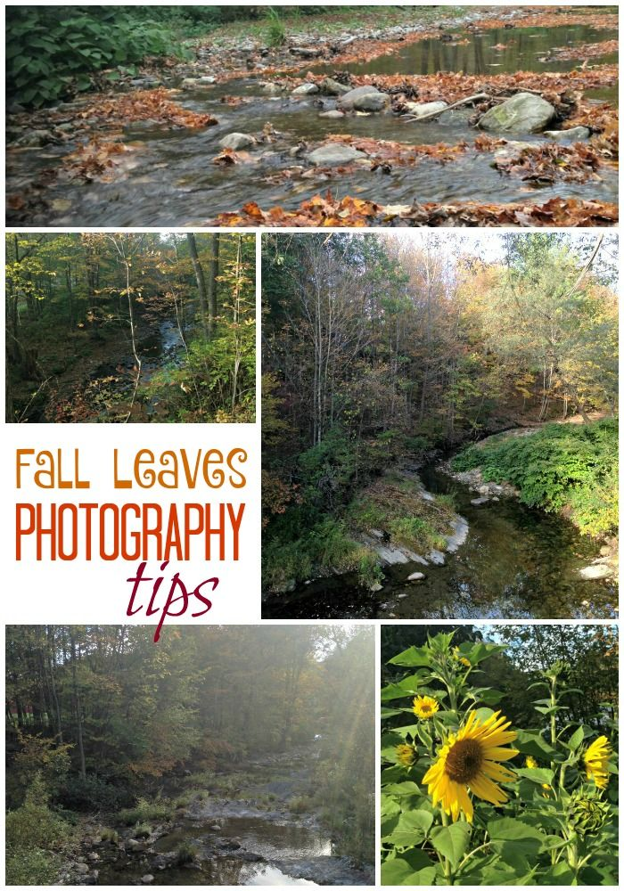 The Complete Beginner's Guide to Fall Leaves Pictures http://po.st/qAAllH #FallFun31 via @ellenblogs