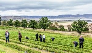 Craft Beer tours by Drink Tasmania – Signature Tours | See Something New - seesomethingnew.com.au