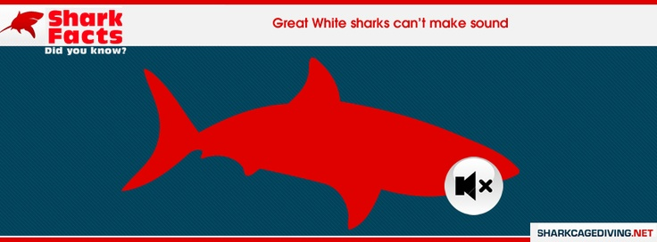 Great White Sharks do not make sounds