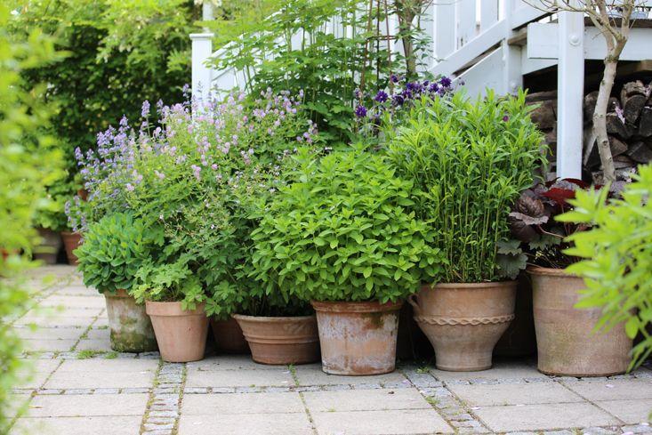 Garden Outpost: An Instagram Star on an Island in Denmark