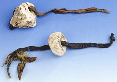 Ötzi's First-Aid Kit. His implements included two hide strips, on to each of which a round lump of material had been threaded. The strips were attached to Ötzi's clothing. Analysis showed that these lumps consisted of the fruiting body of the birch polypore fungus. Right up until the 20th century such bracket fungi were used for many medicinal purposes. The birch polypore is known to have antibiotic and styptic effects.