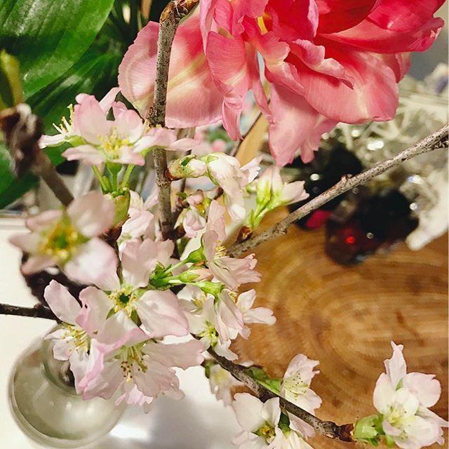 【whitedragon715】さんのInstagramをピンしています。 《* ☀おはようございます☺️✨ 2月11日、土曜日‧⁺✧︎* 今朝も東京の朝は冷たい空気に包まれた 😷しゃむい朝を迎えています🌬🍂🍂🍂 * 外は寒いですが、部屋の中では昨日から 😊桜が開花しました⋆*🌸*⋆ฺ。*🌸。・*・:♪🌸 ココロは小春気分で心地よいです☺️✨ * 週末も寒さに負けずに✊🏻✨ あたたかい微笑みとあたたかい愛に包まれた ささやかな幸せをたいせつに過ごせますように😊🌸 * さぁわたしは、祝日出勤😅 きょうも一日、がんばります😄🌸🌸🌸🌸🌸 * * #おはようございます #2月11日 #土曜日 #今朝も寒い #心は元気 #寒さに負けるな  #部屋の中 は #小春色 #春よ来い #花のある暮らし  #花 #flower #flowerpower #flowerstagram  #桜 #chreeblossom #pink #spring #haveaniceday》
