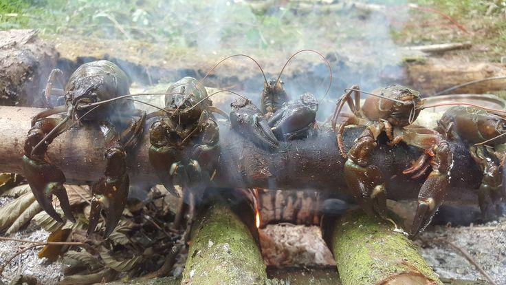 crayfish dirty cooking down at bushcraft uk HQ