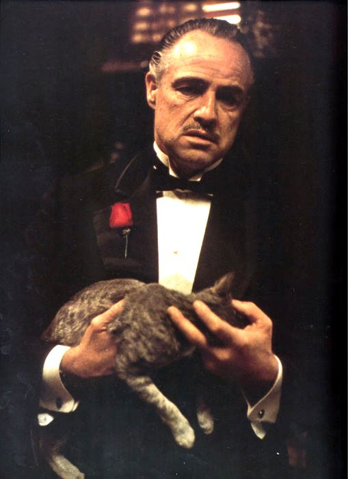 The Godfather high definition wallpapers  #the_godfather_1972 #the_godfather_1972_cast #the_godfather_cast #the_godfather