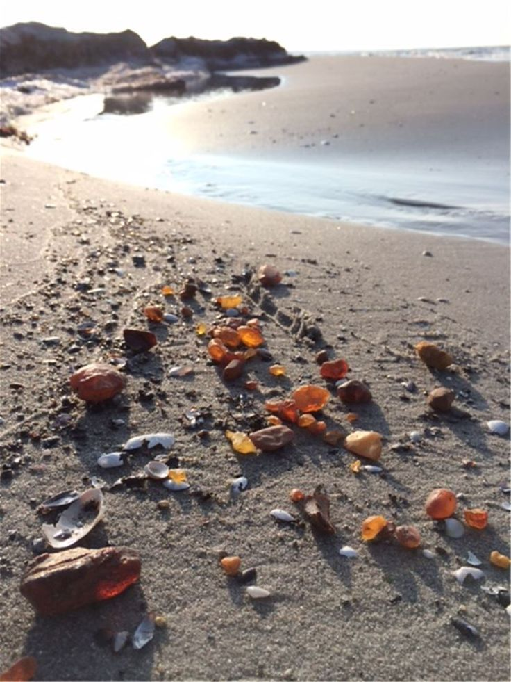 Baltic amber on the Falsterbonäset beach, Skåne, Sweden