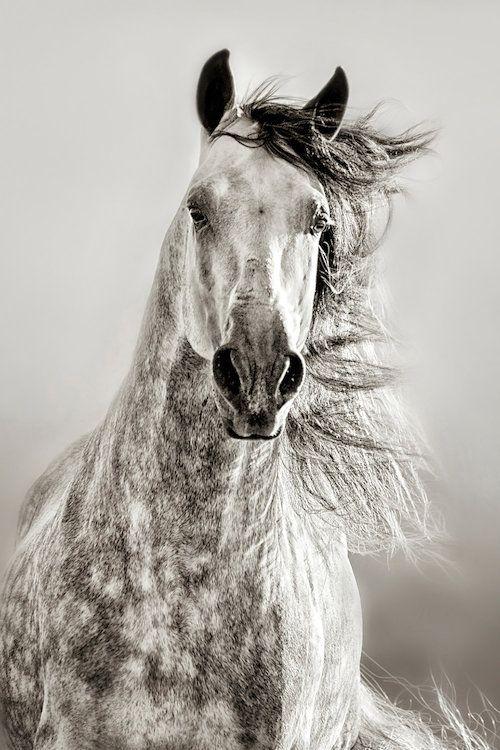 серо-зеленоватый постер с лошадью отлива блеска приуменьшили