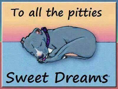Sweet Dreams and may you all be rescued, loved unconditionally and find good, safe homes!