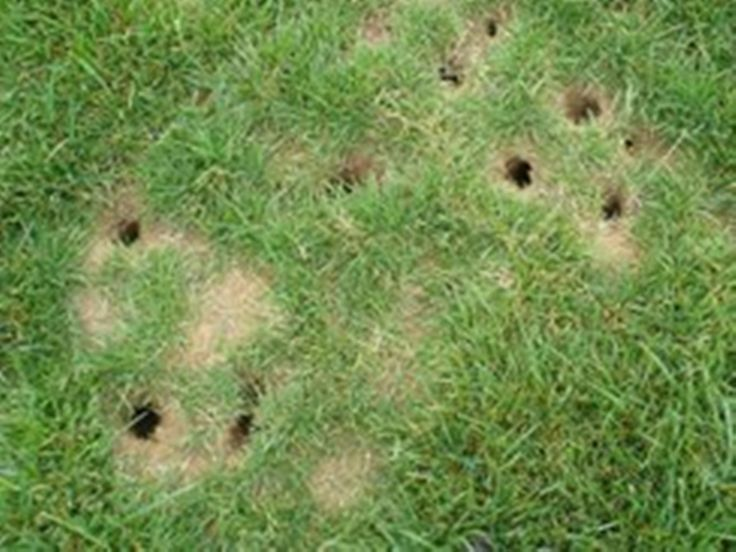 How To Get Rid Of Voles | Garden pests, How to attract ...
