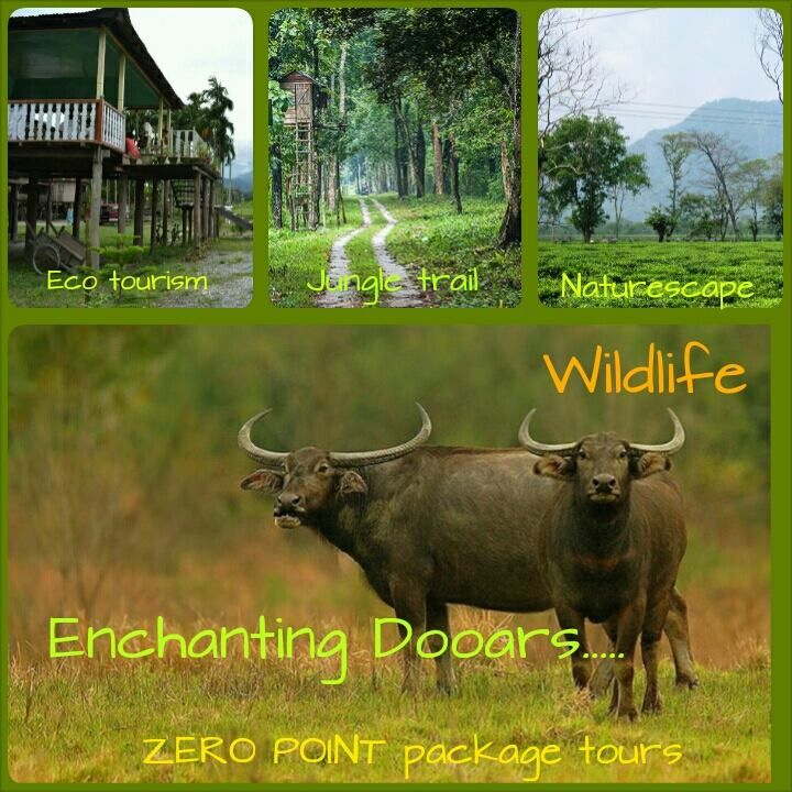 "The place where nature has kept its doors open. Dooars - derived from the word ""doors"", doors to Bhutan - located in the district of Jalpaiguri and Cooch Behar, forms a gateway to the hill stations of North Bengal, Sikkim, Bhutan and North-Eastern states. The dense natural forests, interwoven with lush green tea gardens, enriched by Teesta, Sankosh, Raidak, Torsha, Jaldhaka, Kaljani and other rivers & their innumerable tributaries rolling down the hills fill up your senses with sublimity."