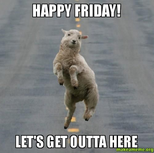 Funny Animal Friday Meme : Leaving work on a friday funny meme laughoftheday