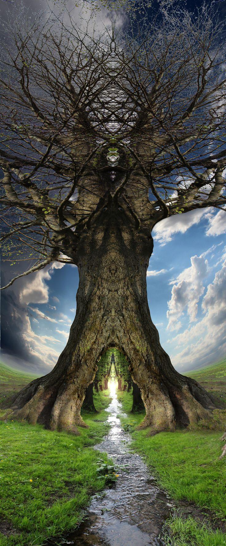 ^Passage through a tree.