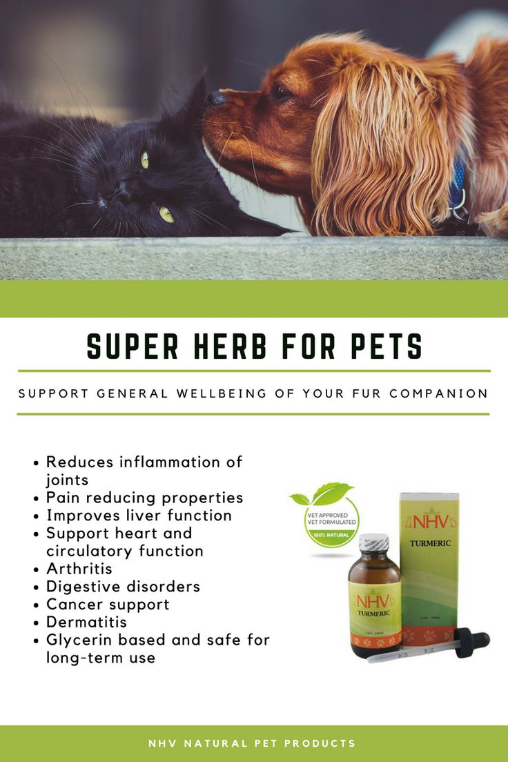 Best Natural Remedies For Pain And Joints For Dogs