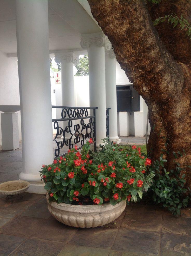 Villa Maria Guest Lodge Container Gardening.