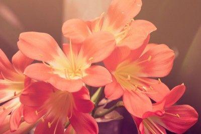Цветы, терракота