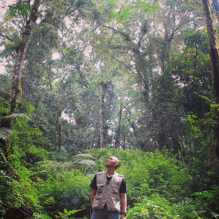 Jungle track, kerinci mountain, INDONESIA Natural beauty