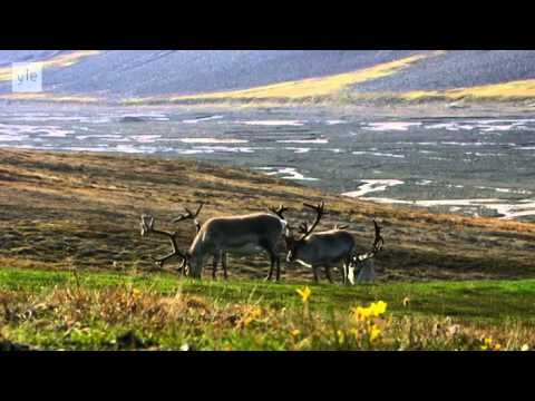 Avara luonto - Villi Pohjola (2/6) Norja - YouTube