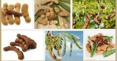 Beneficios del tamarindo para la salud, la piel y el cabello