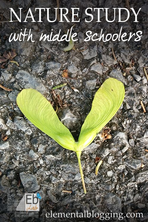 Nature Study with Middle Schoolers for Science   Elemental Blogging
