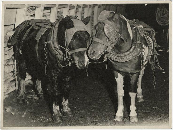 Equine Mine: Blind Horses