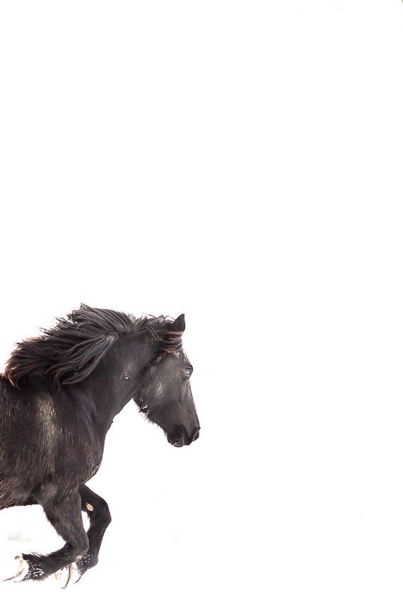 Horse Photography Black Horse Running On White Snow Background Vertical Horse Photo Print Horse P Horse Photography Horses Horse Wall Art