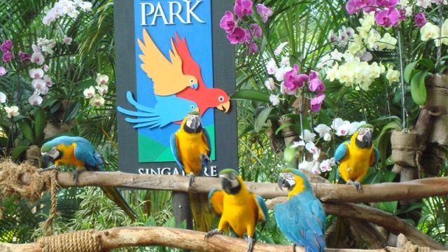 """Indahnya Wisata ke Jurong Bird Park """"Taman Burung"""" Terbesar di Asia : Jika Anda pecinta burung-burung indah mulai sekarang bisa melirik wisata ke Jurong Bird Park (JBD). Sejak berkiprah pada 1971 tempat ini merupakan salah satu suaka"""