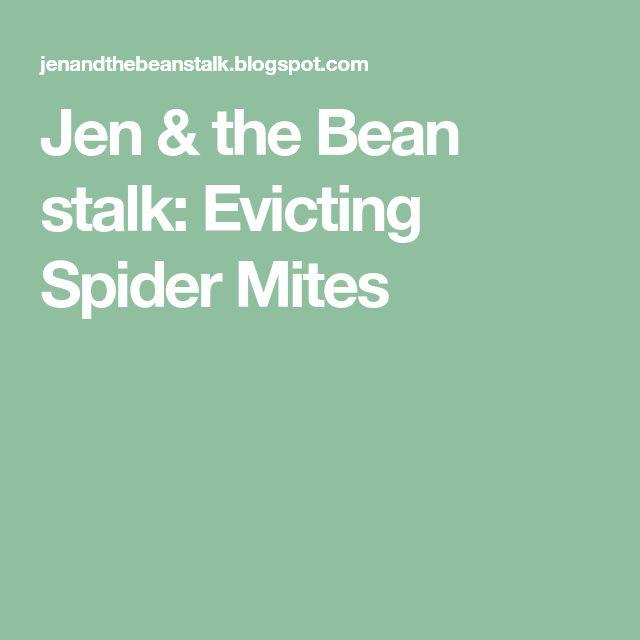 Jen & the Bean stalk: Evicting Spider Mites