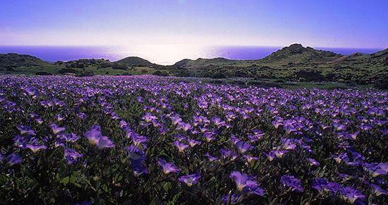 "Desierto de Atacama, ""Desierto Florido, Chile"