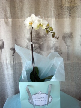 White orchid plant.