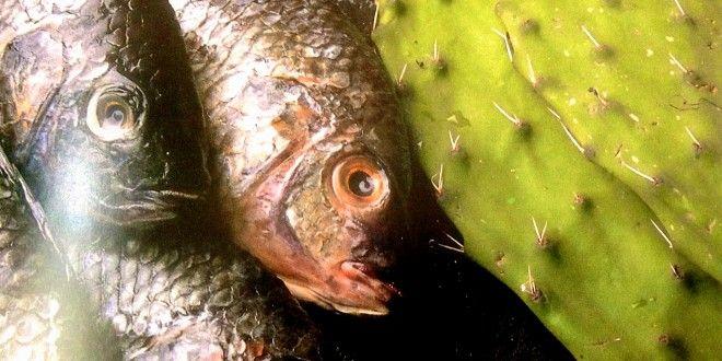 Receta Filetes de pescado en Totomoxtle | Los Sabores de México y el mundo