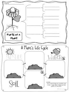 Life Cycle of Plants {20 Activities & Foldable Flower Project Book} - Linda Kamp - TeachersPayTeachers.com