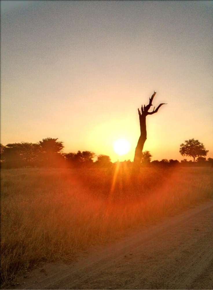 Great new entry to our sunset/rise/moon comp. Just tweet pics with #africasolstice RT @AboutTheBush: #africasolstice