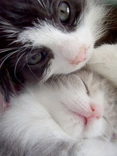 Mama Cat with Her Kitten