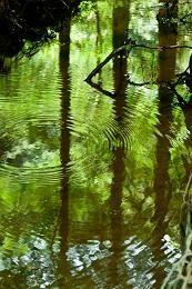"""""""水のように自然に流れにそって、生きられたら、人生はどんなに気楽で楽しいことか。 古代中国の人達は、その水に注目し、そこに道TAOの生き方を見た"""" 老子道徳経8章-上善は水のごとし(…) http://tao-academy.jp/laozi/laozi-003.html?_ga=1.245163077.1926583939.1441345712"""