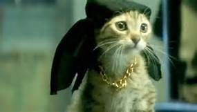 keanu cat - LinuxMint Yahoo Image Search Results
