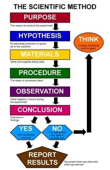 scientific method: