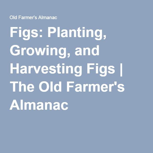 Vegetable Gardening For Beginners Old Farmers Almanac ...
