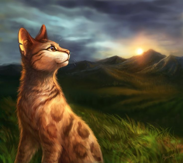 1028 Best Images About Warrior Cats Animation On Pinterest