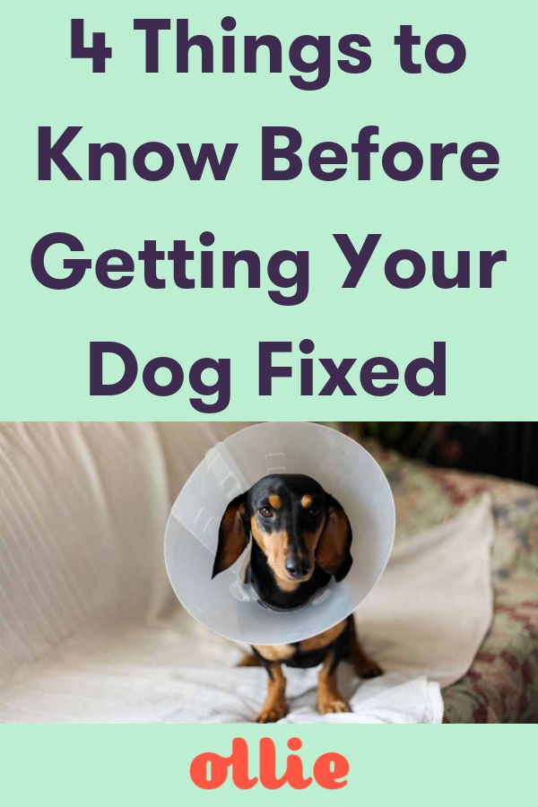 4 Things I Wish I Knew Before Getting My Dog Fixed Dog Spay