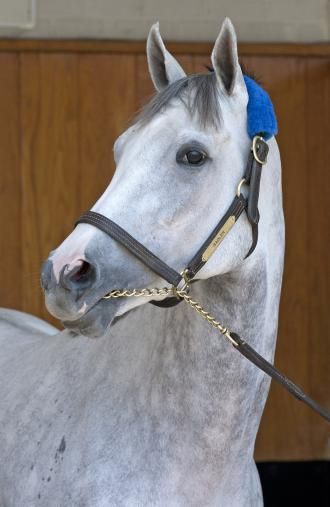 96 Best Images About Pedigree Of A Super Stallion Tapit