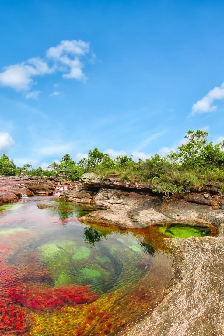 Caño Cristales (the Liquid Rainbow) - Villavicencio, Colombia