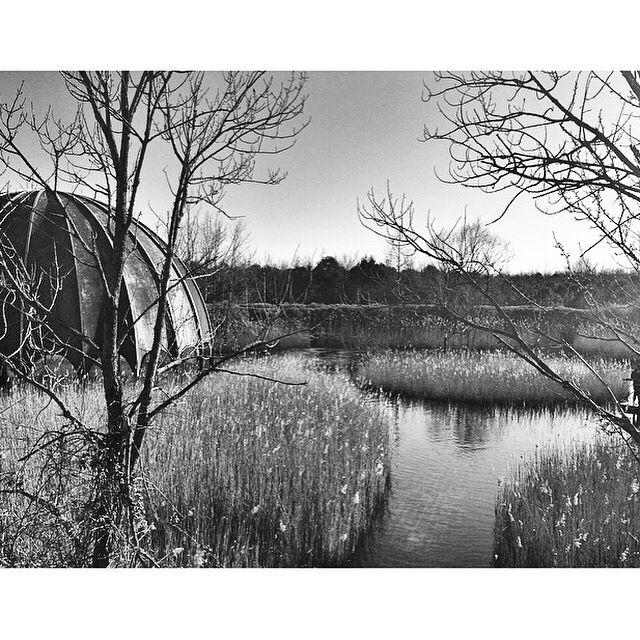 #milanomarittima #emiliaromagna #luoghiperduti #landscape #water #nightclub #woodpecker #lost